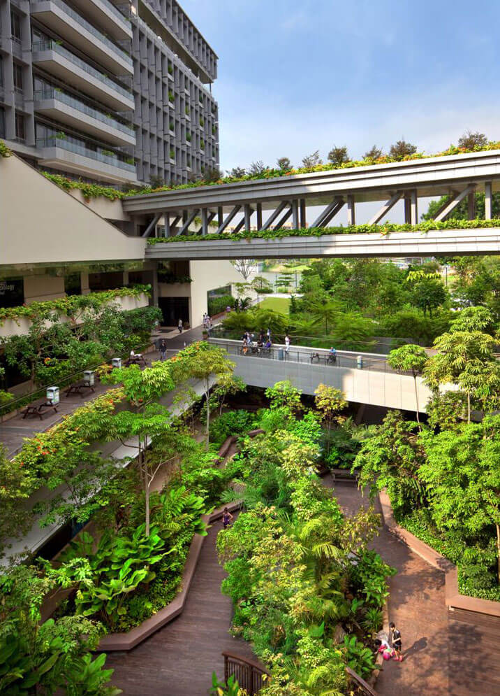 biophilia hypothesis design for a hospital in singapore